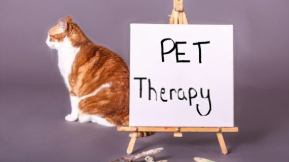 How to Help Your Pet Get Mental Exercise from Home?